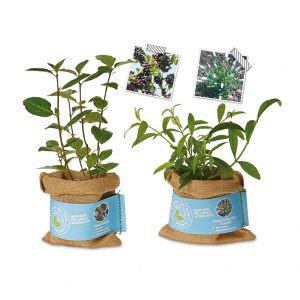 Schenk der Erde eine Pflanze - Aroniabeere+Schmetterlingsfleder