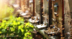 Bienen auf dem Flug zum Bienenstock