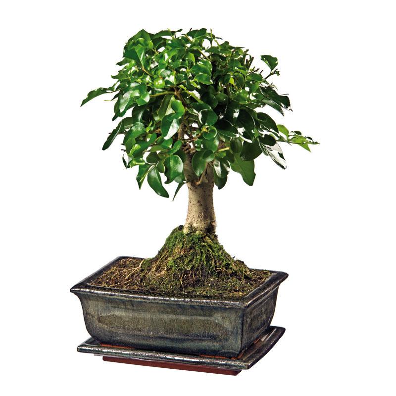bonsai florapresenta nat rlich werben werbemittel. Black Bedroom Furniture Sets. Home Design Ideas