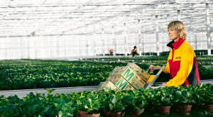 Pflanzenversand per DHL