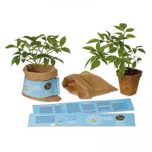Schenk der Erde eine Pflanze - Holunder