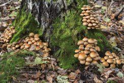 Pilz um einen Baum herum