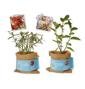 Schenk der Erde eine Pflanze - Sanddorn+Felsenbirne