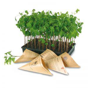 pflanzen in der spitzt te florapresenta nat rlich werben werbemittel. Black Bedroom Furniture Sets. Home Design Ideas