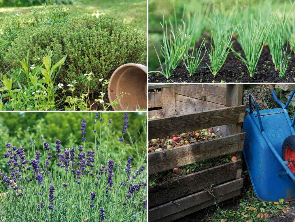 Kräuterpflanzen und ein Komposthaufen für natürliches Gärtnern
