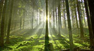 Stimmungsbild Wald mit aufgehender Sonne