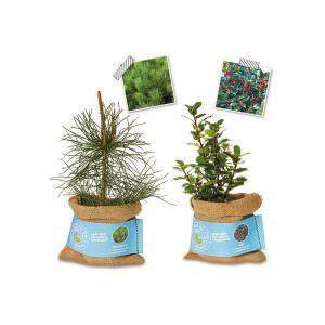 Schenk der Erde eine Pflanze -Waldkiefer+Ilex