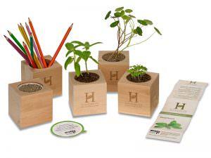 Gewachsene Pflanzen im Samen-Holzwürfel Woody