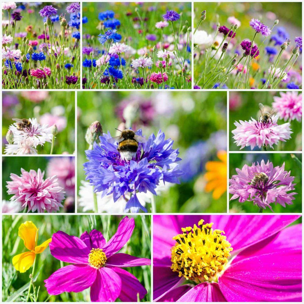 Nektarreiche Blumen für Bienen
