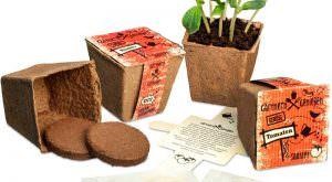 Gärtnern & Genießen – Gemüsegarten