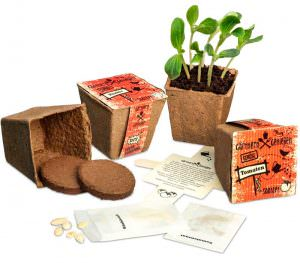 Gemüsesaat im Umwelttopf