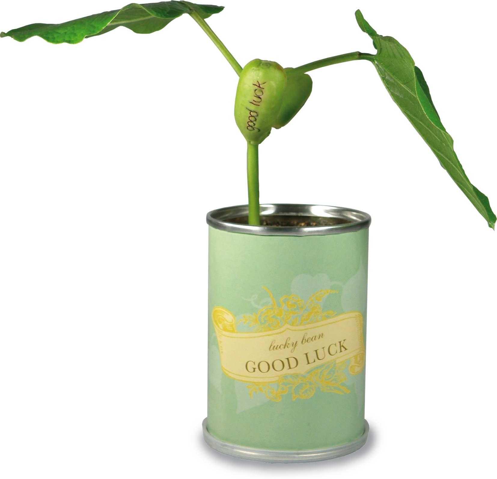 macflowers dosen florapresenta nat rlich werben. Black Bedroom Furniture Sets. Home Design Ideas