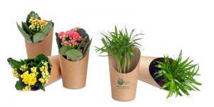 Minipflanzen im Becher