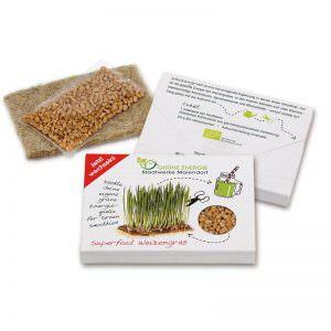 Weizengras in einer Präsentverpackung