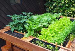 Hochbeet mit Gemüse und Kräutern
