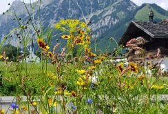 Wildblumenwiese in Pertisau am Achensee
