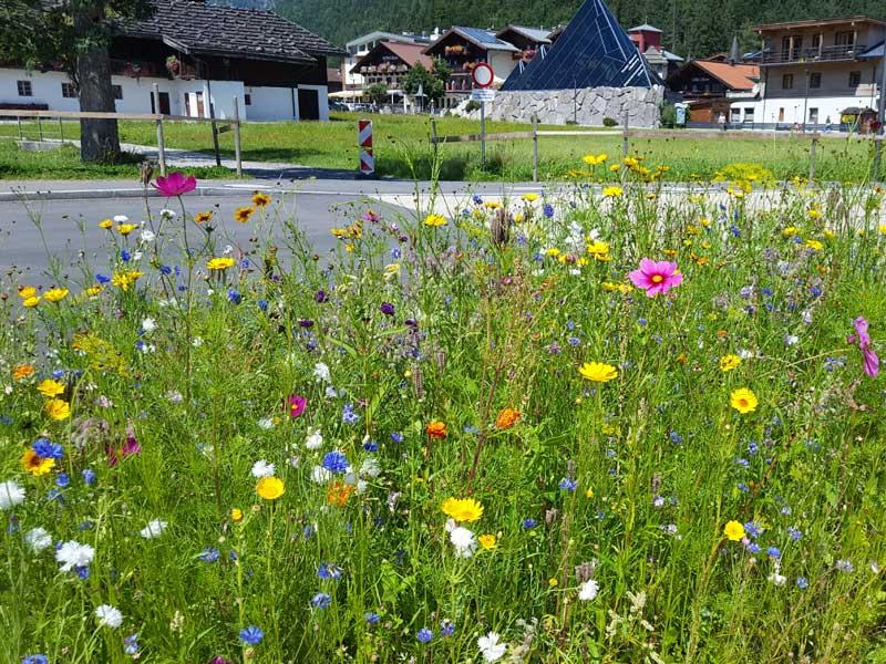Wildblumenwiese an der Uferstraße in Pertisau am Achensee